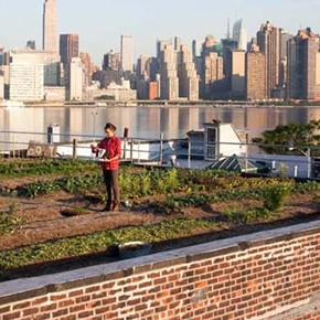 Sustainable Rooftop Agriculture Guide
