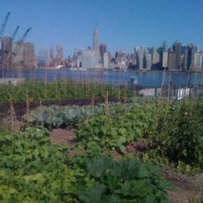 Lucky Produce Gets Skyline View